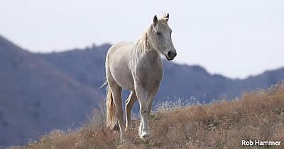 Defend the Onaqui Wild Horse Herd from Devastation