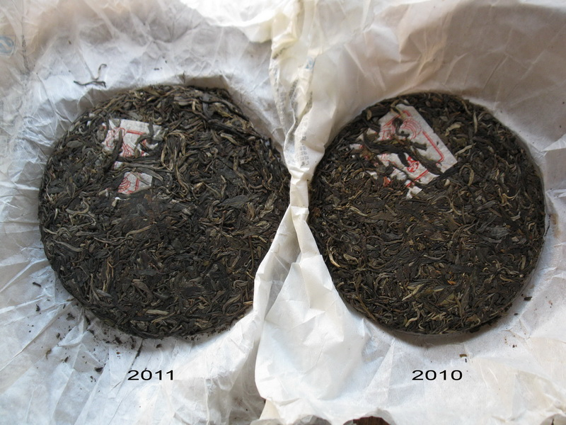 bulang peak raw puer cskes - 2010 and 2011