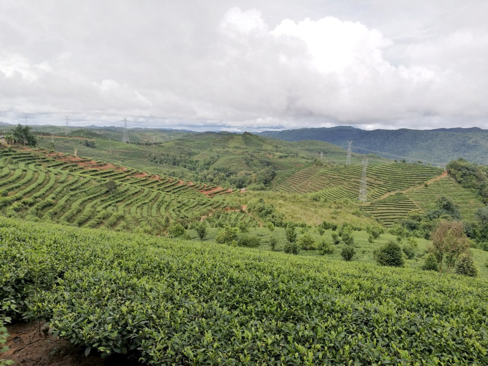 Dadugang tea plantations
