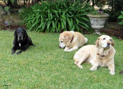Truman, Marlowe, Darla