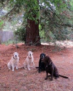 Marlowe, Darla, Truman, Hector