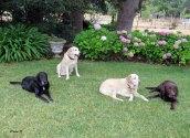 Truman, Marlowe, Darla and Hector