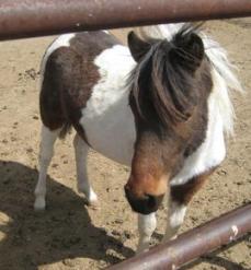 Meet Mastercard the Pony!