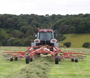 Grass is rowed up in preparation for baling. The best moisture range for making balage is between 40% and 60%, which may take only a day's wilting, even less.