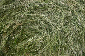 Using quality grass with a high sugar content increases the chances of making good balage.