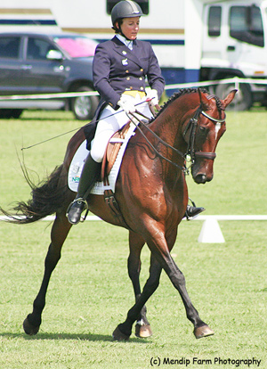 Dressage rider Shiwon Green and Gosh compete at GP level at the NI Dressage Champs at the weekend.