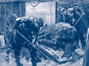 Horses often fell, on average once every hundred miles of travel.