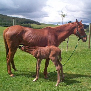 Should a mare be dewormed within a day of having a foal?