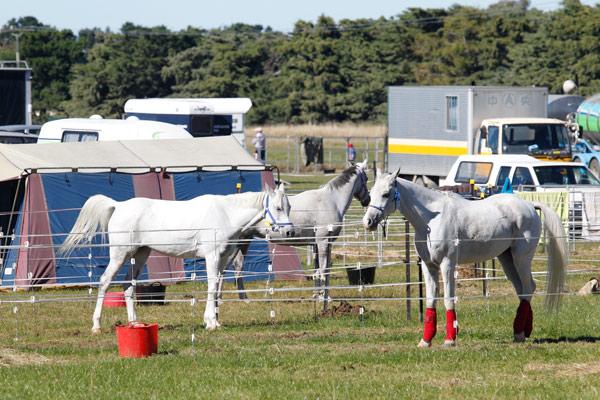 NZ-endurance-champs8237