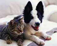 Over 260,000 cats and dogs entered Britain's rescue organisations during 2009, research reveals.