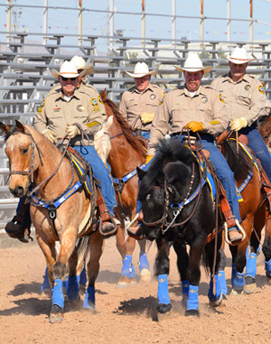 Tommy, at front right, leads the Yuma County Sheriff's Office posse during his first formal training session in Arizona. Tommy, a former member of the caisson section at Joint Base San Antonio-Fort Sam Houston, Texas, found a new career in Arizona with help from DLA Disposition Services.