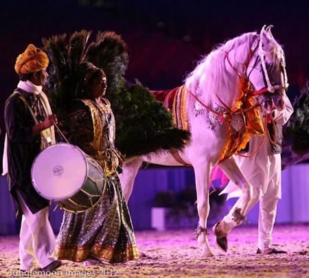 Marwari Horse in rehearsal for Royal Windsor