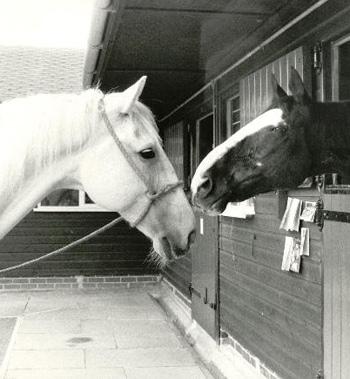 Sefton and Echo