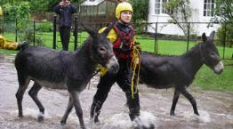 The water rescue team has been kept busy in recent days.