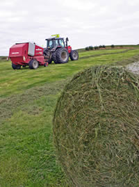 The bales need to be tight to minimise the amount of air that will be sealed in with the plastic wrap.
