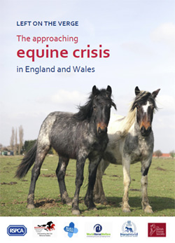 Left on the Verge: The approaching equine crisis in England and Wales