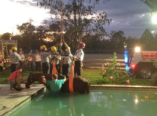 Rescuers prepare to lift a Florida horse stranded in a swimming pool.