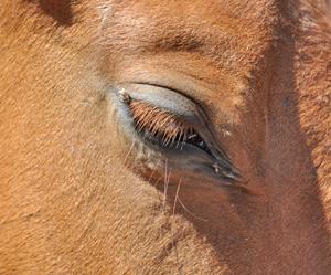 stock-eye