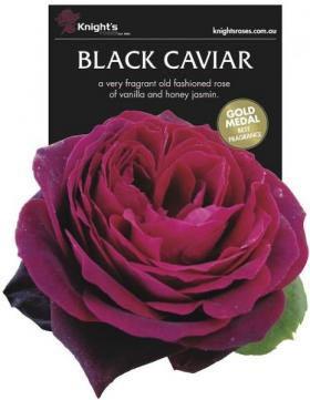The new Black Caviar Rose.