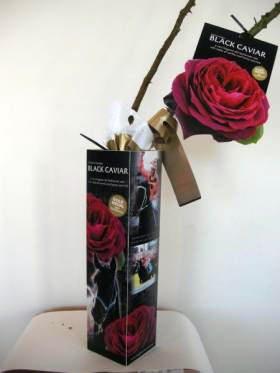Black-Caviar-rose-packaging