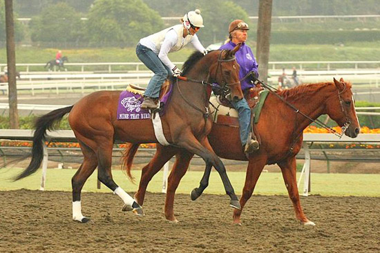 Mine That Bird at Santa Anita Park during the week of the 2008 Breeders Cup.