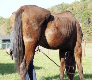One of the horses found on Ann Arnold's property, in breach of her probation.