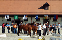 swiss-national-stud2