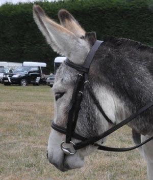 donkey-stock