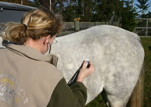 Checking intestinal sounds can be done with or without a stethoscope.