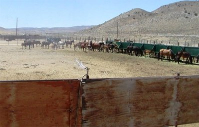 The BLM has installed a sprinkler system at the  Palomino Valley Wild Horse and Burro Center, but advocates say it is not enough.