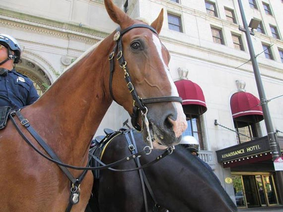 Rescue horse Jakar is the newest recruit in the Cleveland Police Mounted Unit. Photo: Cleveland Police