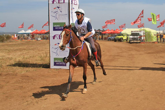 "John Crandell at the FEI Championships in Chile in 2011. He says endurance testing could play a unique role in mankind's relationship with animals ""if we define and regulate the discipline thoughtfully""."