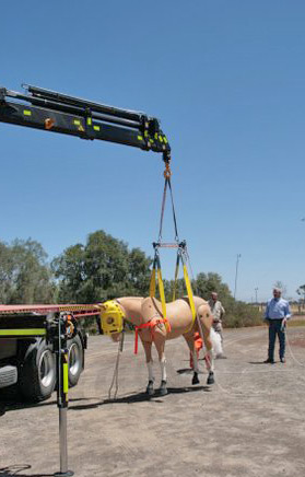 A crane demonstrates the use of a sling to lift a horse.
