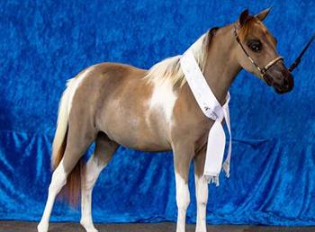 mini-horses2