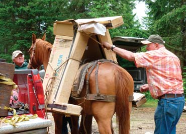 Pack Horses And Mules Called On To Get Wildnerness Projects Done