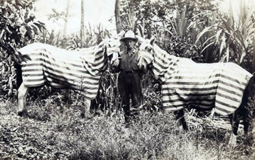Swiss Long Rider Aimé Tschiffely faced many challenges during his epic journey from Buenos Aires to New York in 1925. While riding through Central America the ticks attacked his horses so savagely, Aimé devised blankets to help ward off the insects.