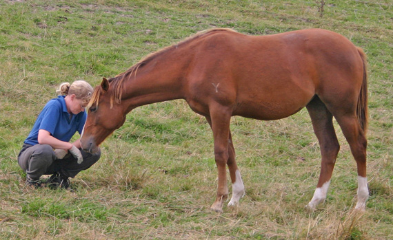 Best friends forever? The interaction between horses and humans is not without its challenges.
