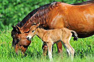 """""""Help a Horse Day"""" features a photo contest and a chance for groups to win grants."""