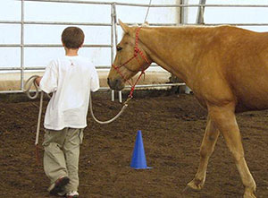 A child leads a horse during a 12-week equine-assisted learning and prevention program. Photo by Patricia Pendry, WSU