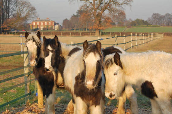 Dougie, Donald, Edward and Stanley are among the young cobs waiting for a new home.