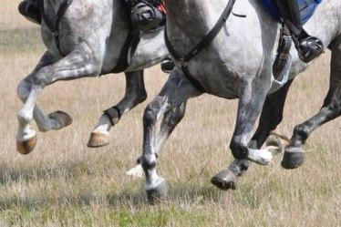 gallop-legs-endurance_2546