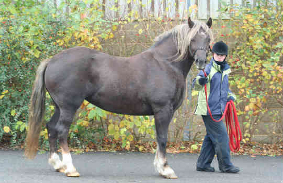 Rhia is classified as obese.  Photo: World Horse Welfare