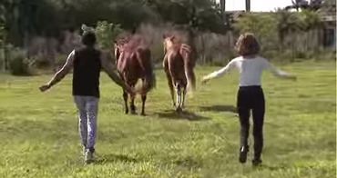 Prancercise: The horses are not so sure, it would seem.