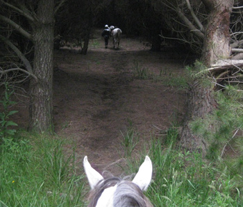 Taking a show horse on 15 to 20km endurance or trail ride can help build greater aerobic capacity and endurance for long show weekends.  © Sophie Scemama