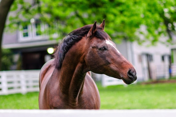 Cigar has died at the age of 24 following beck surgery.