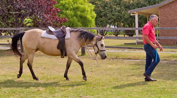 This three year old mare has learned that it's always easy and pleasant to stay with me. So she happily follows.