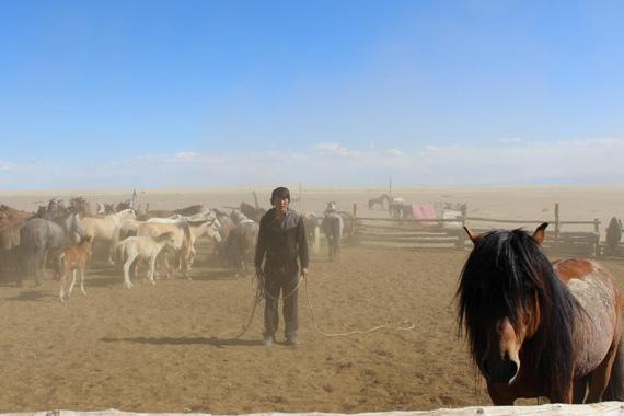 A man catches a domestic Mongolian horse in Khomiin Tal, Mongolia.