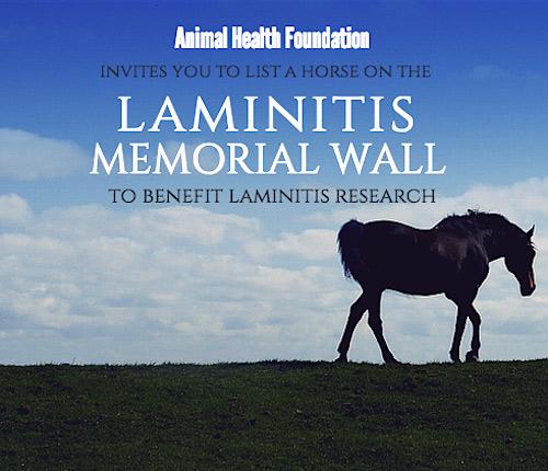memorial-laminitis