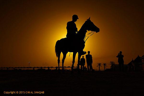 Endurance-al-shaqab