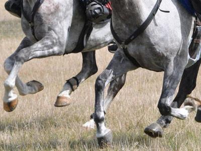 gallop-endurance400